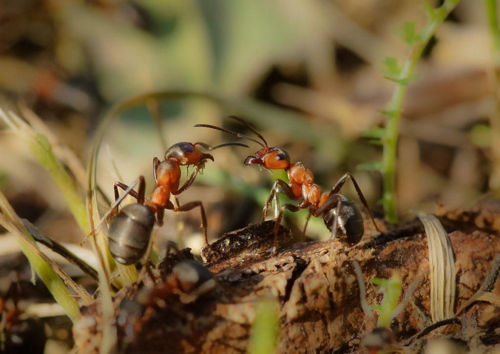 Запахи в жизни муравьев