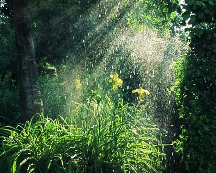 аромат дождя в лесу